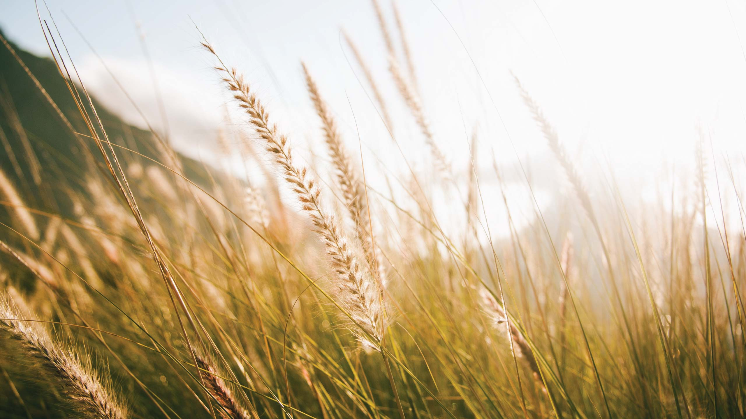 Uprooting the weeds from the wheat